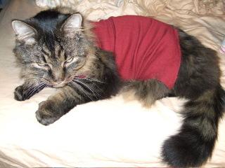 Byronsweater